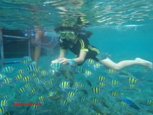 Snorkeling di sekitar Pulau Pari. Lokasi : dekat Pulau Tikus.