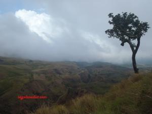 Padang rumput alias sabana di jalur pendakian Sembalun.