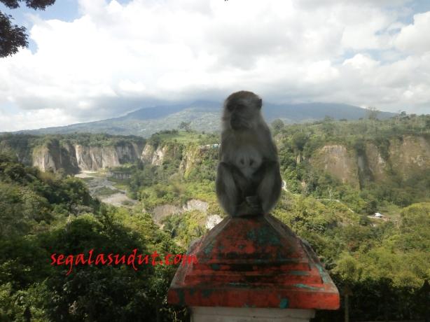 Monyet Ngarai Sianok. Tempat pandang Ngarai Sianok ini dipenuhi monyet. Tapi ga senakal di Cagar Alam Pangandaran. 16 Agustus 2014