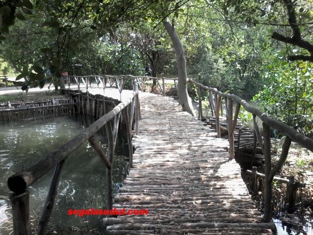 Salah satu jembatan menyusuri perairan mangrove TWA.