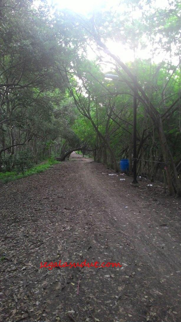 jalur-dalam-ekowisata-mangrove-copy
