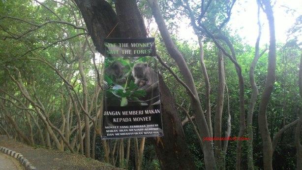 Monyet Ekowisata Mangrove copy.jpg