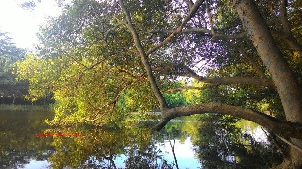 perairan-ekowisata-mangrove-copy